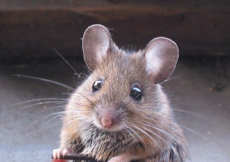 Not a picture of Fievel